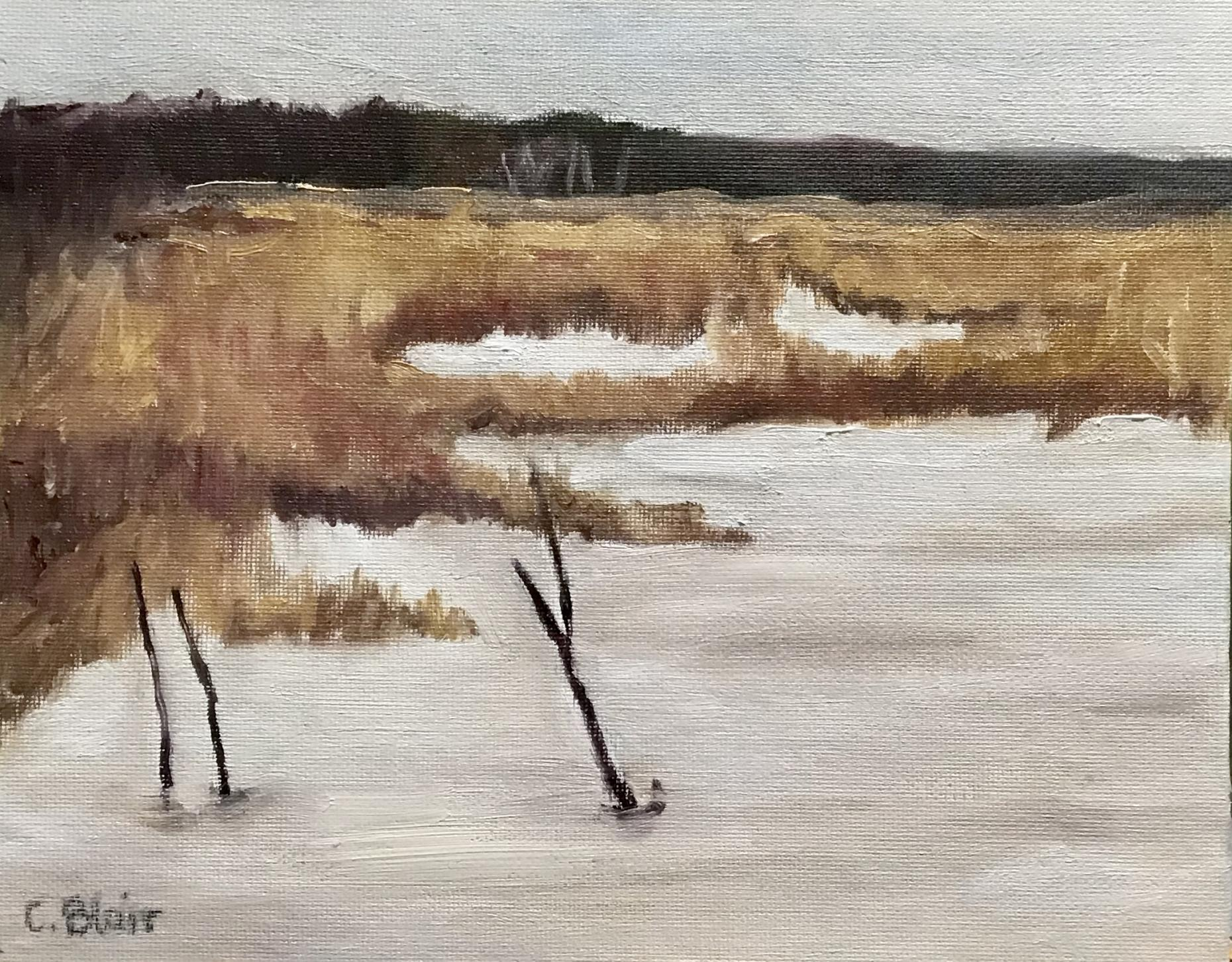 Tiny Marsh in March